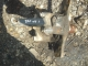 цапфа левая 1794845, 1367345 DAF XF 105 даф