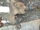 цапфа левая 1895939 1757466 Scania 4 скания